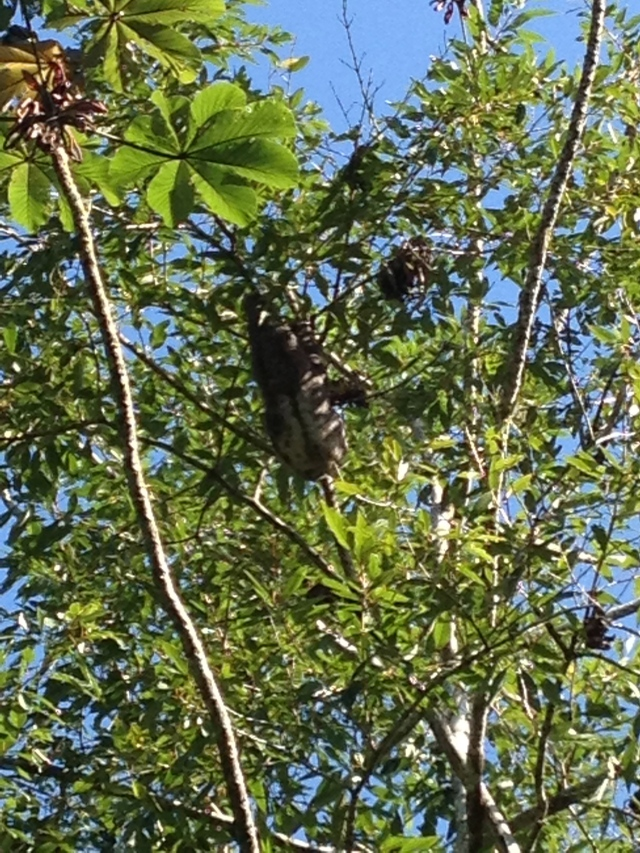 Sloth spotting on the way to the beach!!