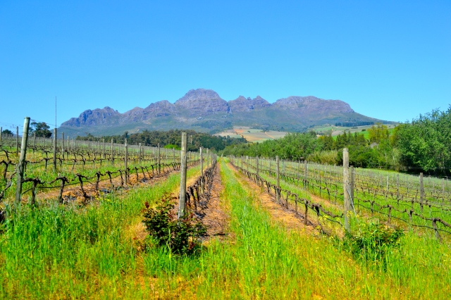Vineyards + mountains = beautiful!