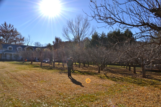 Sunshine over the orchard.