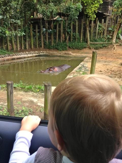 Hippo spotting.