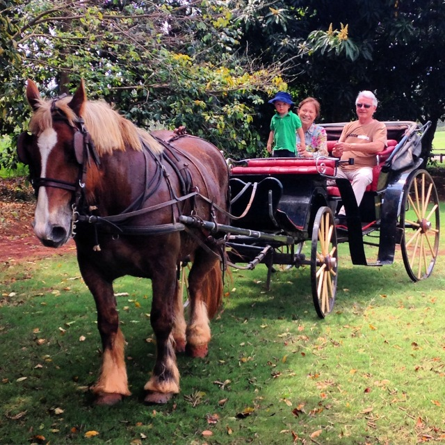 And to top it all off, a ride around the property in the horse-drawn carriage!